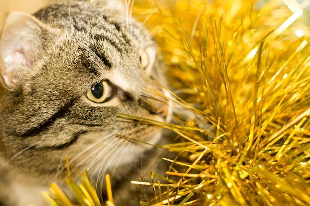 Tabby cat und yellow tinsel