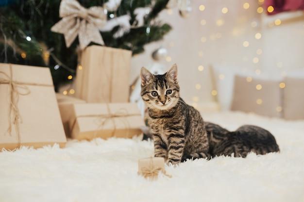 Tabby kätzchen sitzt auf flauschigem plaid neben einer kleinen geschenkbox.