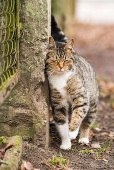 Tabby-katze des frühlingsmarsches nahe dem zaun. am hintern und liebkosungen auf dem alten zaun.