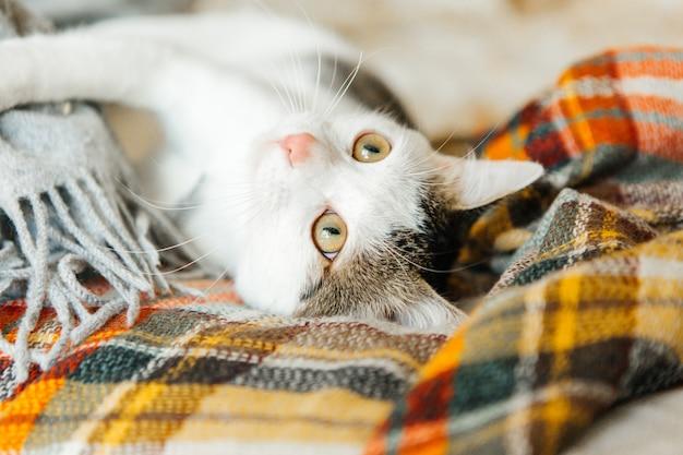 Tabby katze liegt auf einer karierten, niedlichen katze