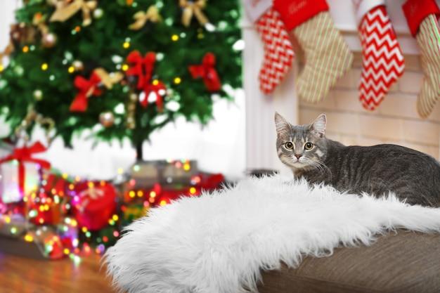 Tabby-katze liegt auf weißem plaid im weihnachtlich dekorierten wohnzimmer