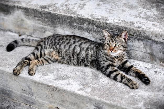 Tabby katze liegt schlafend auf der treppe neben der veranda