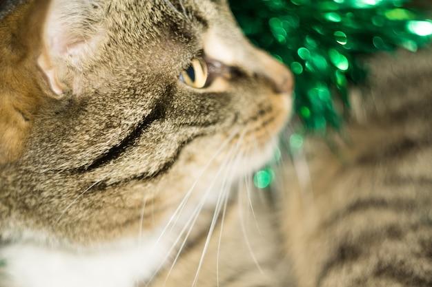 Tabby-katze und grünes tinsel