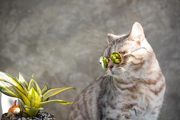 Tabby katzenkopf schuss tragen brille mit einem kaktus im grünen tontopf