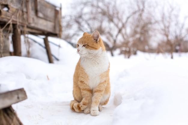 Tabbykatze sitzt im schnee