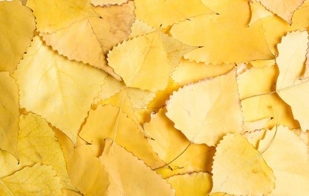 Tabelle der gefallenen gelben blätter. die herbstsaison.
