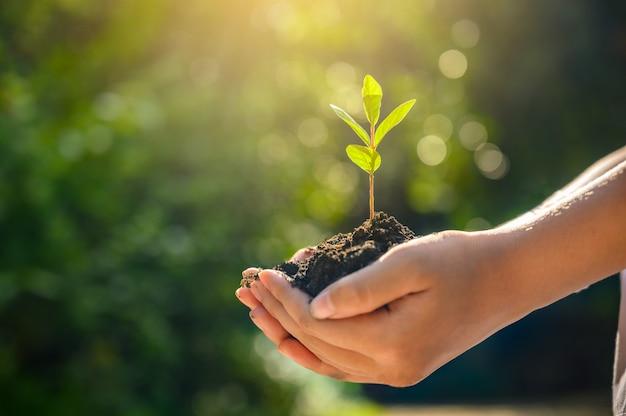 Tag der umwelt-erde in den händen der bäume, die sämlinge wachsen. weibliche hand, die baum auf naturfeldgras walderhaltungskonzept hält