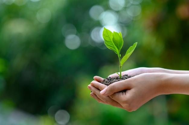 Tag der umwelt-erde in den händen der bäume, die sämlinge wachsen