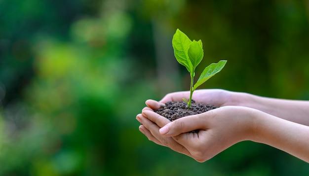 Tag der umwelt-erde in den händen der bäume, die sämlinge wachsen.