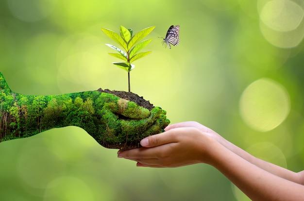 Tag der umwelt erde in den händen von bäumen, die sämlinge züchten.