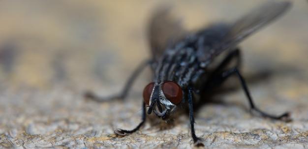 Tagessitzen-fliegen-makrophotographie