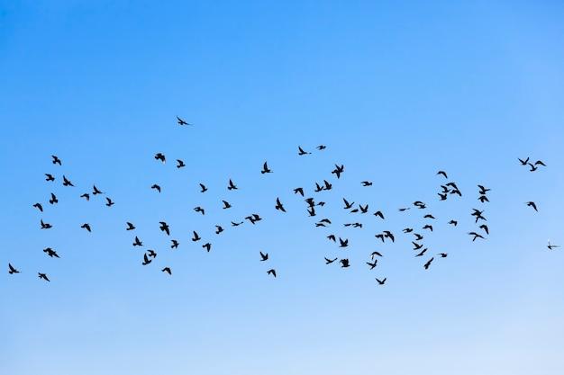 Tagsüber eine große anzahl von vögeln gegen den himmel, fliegende vögel, die in großer zahl in einer herde leben
