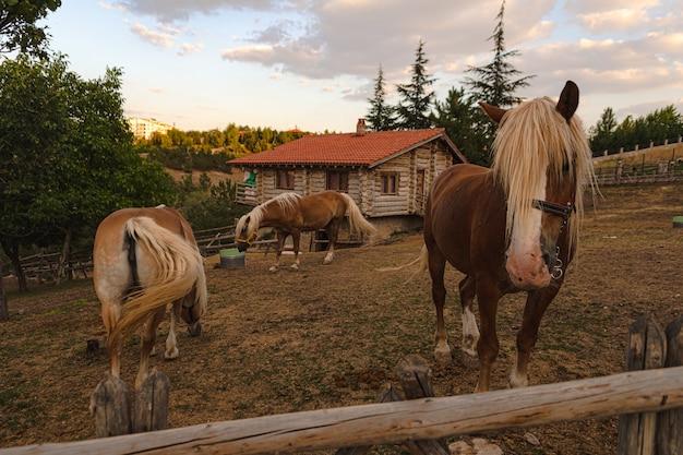 Tagsüber schöne pferde auf dem hof