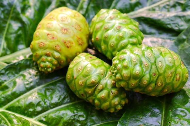 Tahitian noni great morinda green ist ein kraut auf dem hintergrund grüner blätter