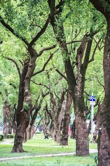 Taipei, taiwan - 18. juni 2018: park, ein stuhl im park, entspannend, banyan-bäume auf der dunhua road, taipeh. sich ruhig fühlen