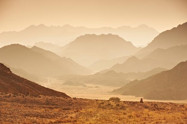 Tal in der sinai-wüste