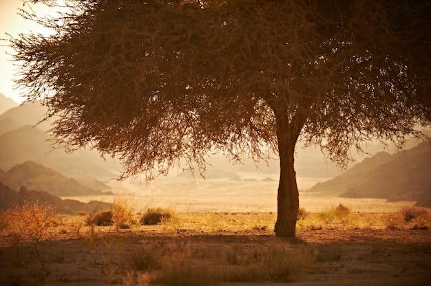 Tal in der wüste mit einem akazienbaum mit bergen