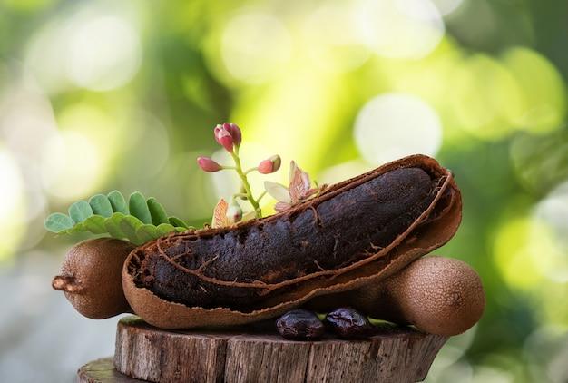 Tamarindenfrüchte und -blumen auf verschwommener natur.