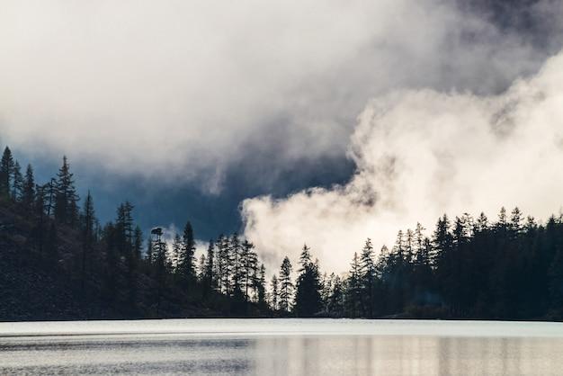 Tannen entlang des bergsees im dichten nebel