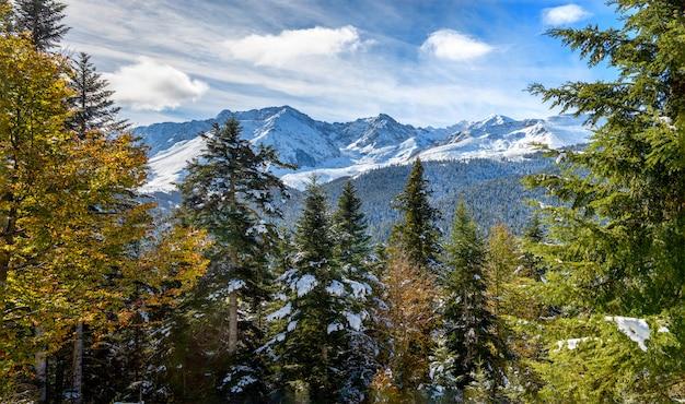 Tannenbäume in französischen pyrenäen-bergen mit pic du midi de bigorre