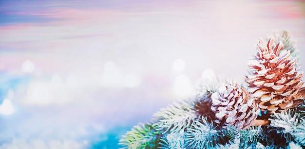 Tannenbaum weihnachtssonnenuntergang