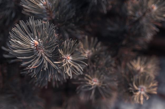 Tannenbaumbrunch hautnah