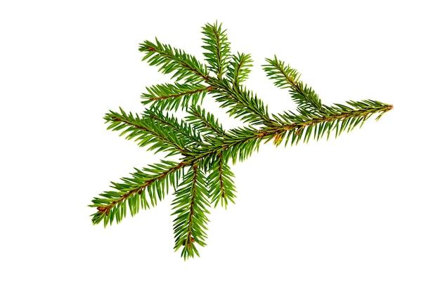 Tannenbaumzweig lokalisiert auf weißem hintergrund. kiefernzweig. weihnachtstanne.