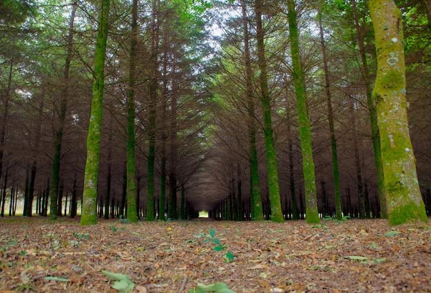Tannenholz in der spanischen landschaft