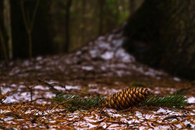 Tannenzapfen des letzten jahres liegt auf schnee bedeckt mit gefallenen nadeln in einem frühlingswald
