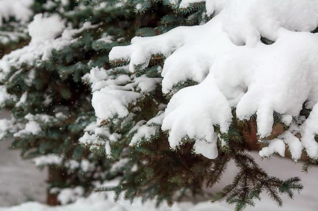 Tannenzweige bedeckt mit frischem schnee, fallende schneeflocken, winteroberfläche