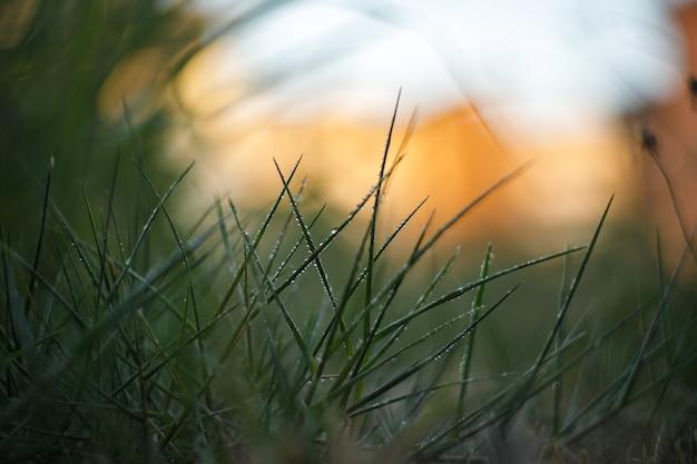 Tapete der grünen wiese bei sonnenuntergang, dunkle töne
