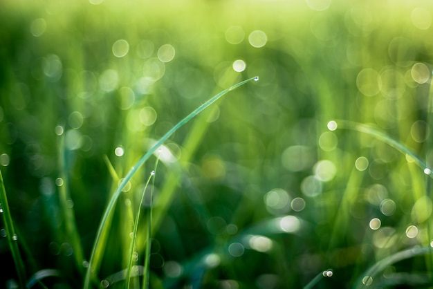 Tau auf den blättern des morgens des grases im frühjahr