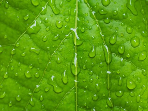 Tau auf den blättern hintergrundtau auf den blättern nach regen in der regenzeit