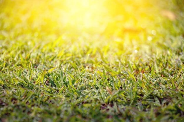 Tau auf gras mit unscharfem grünem hintergrund unter dem morgensonnenlicht.