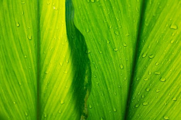 Tau und grün lässt hintergrund