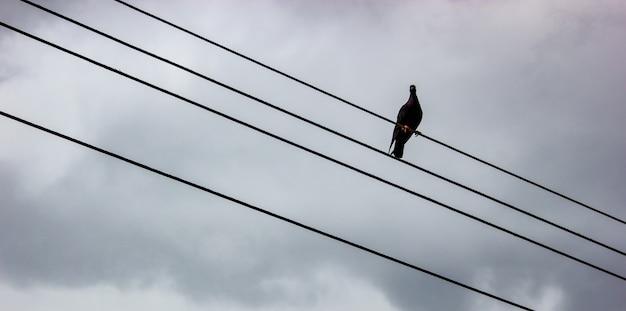 Taube auf dem draht mit grauem hintergrund