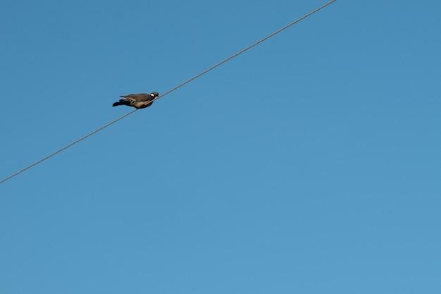 Taube auf einem draht gegen den himmel mit kopienraum.