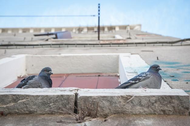 Taube auf fenster in venedig