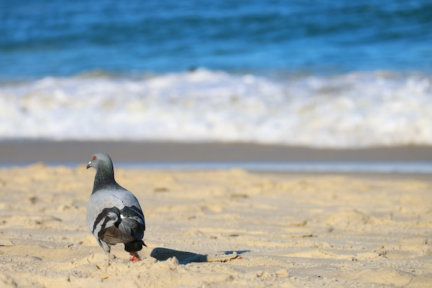 Taube, die auf dem sonnigen strand mit undeutlichen spritzenden meereswellen sich entspannt