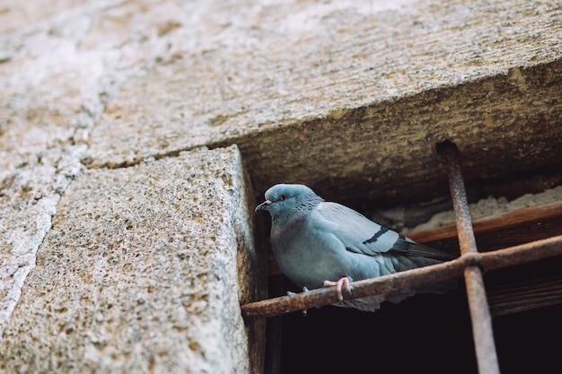 Taube hängt am draht