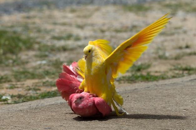 Tauben, die auf dem gras in einem stadtpark stehen