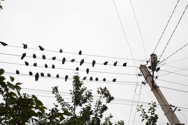 Tauben, die auf elektrischem draht mit wipfel stillstehen