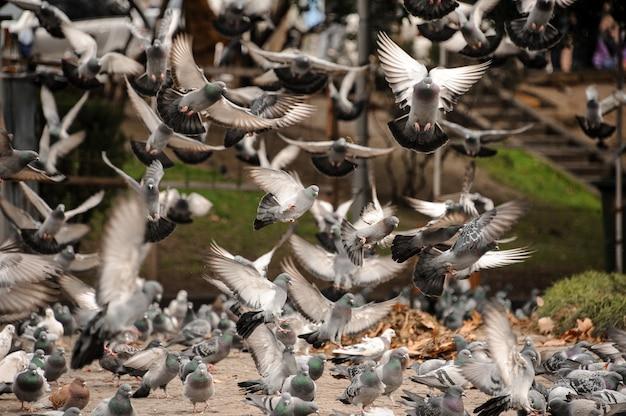 Tauben, die weg vom boden im park fliegen