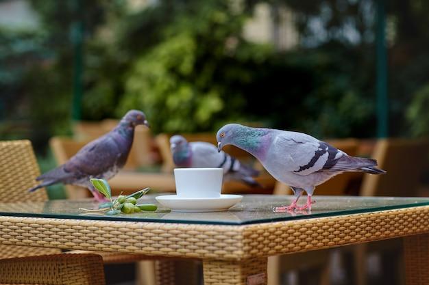 Tauben sitzen auf einem korbtisch in einem straßencafé