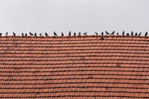 Tauben sitzen in einer reihe auf altem rotem ziegeldach