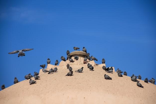 Taubenschwarm auf alter dachkirche mit blauem himmel.