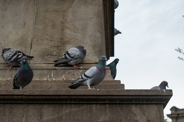 Taubenschwarm thront tagsüber auf einem betongebäude