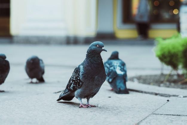 Taubenwanderung, sommerzeit, outdoor