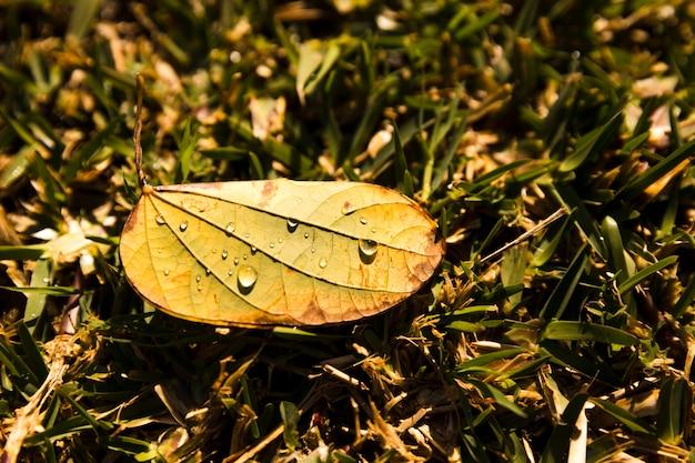 Tautropfen auf geschlossenem blatt über dem grünen gras