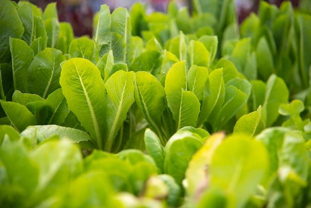 Technologie für den gemüseanbau in gewächshäusern
